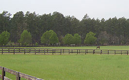 Southern Pines and Pinehurst real estate is perfect for horse farms.