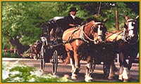 Horse and buggy rides through the Village of Pinehurst, days gone by live again in Pinehurst.